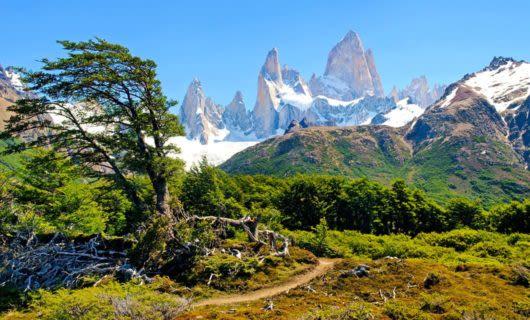 Wind-blown tree in front of Patagonia peaks