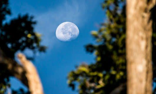 Moon hangs in blue sky between trees