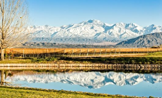 Vineyard in front of mountains with lake reflection