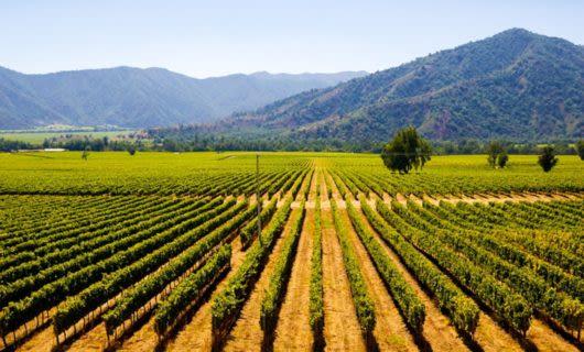 View past vineyard of mountains beyond