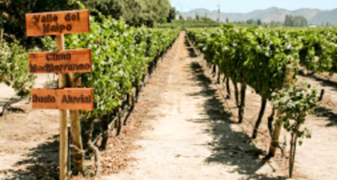 Vineyard aisle with signpost