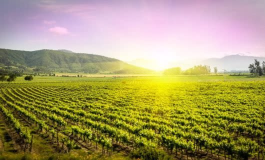 Sunrise breaks over South America vineyard