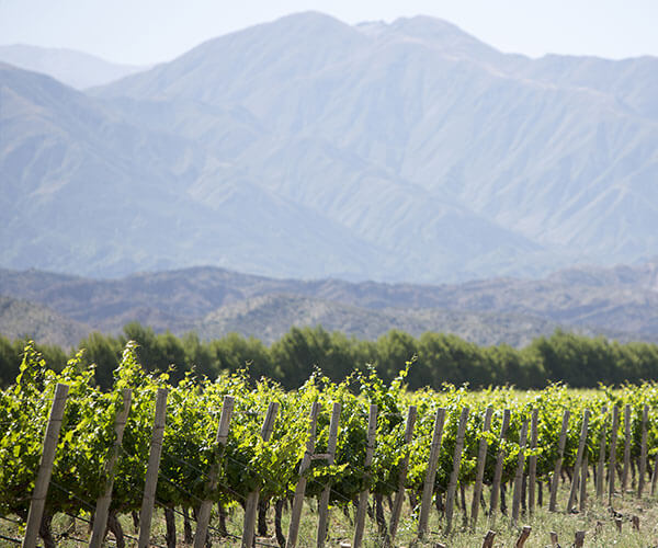 scenic Chilean vineyard on South America Wine Tour