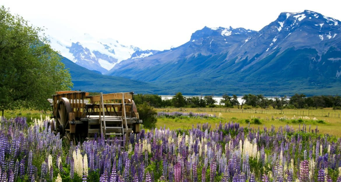 Wagon sits among purple flowers in Patagonia valley