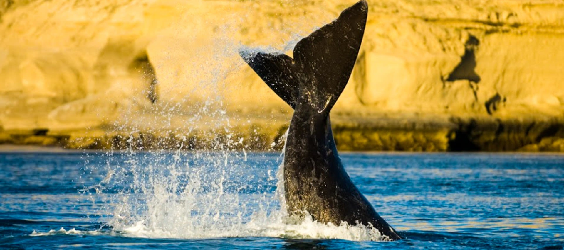 Whale tail flips out of water