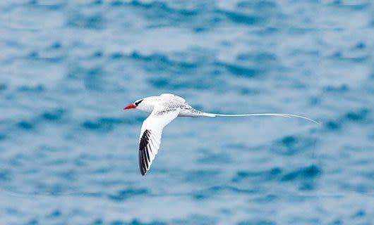 White bird flies over ocean