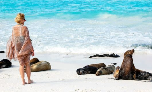 Woman approaches seals on beach