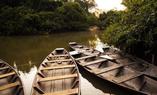 Wooden canoes rest on edge of forest river