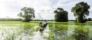 Tour group on horses through wetlands
