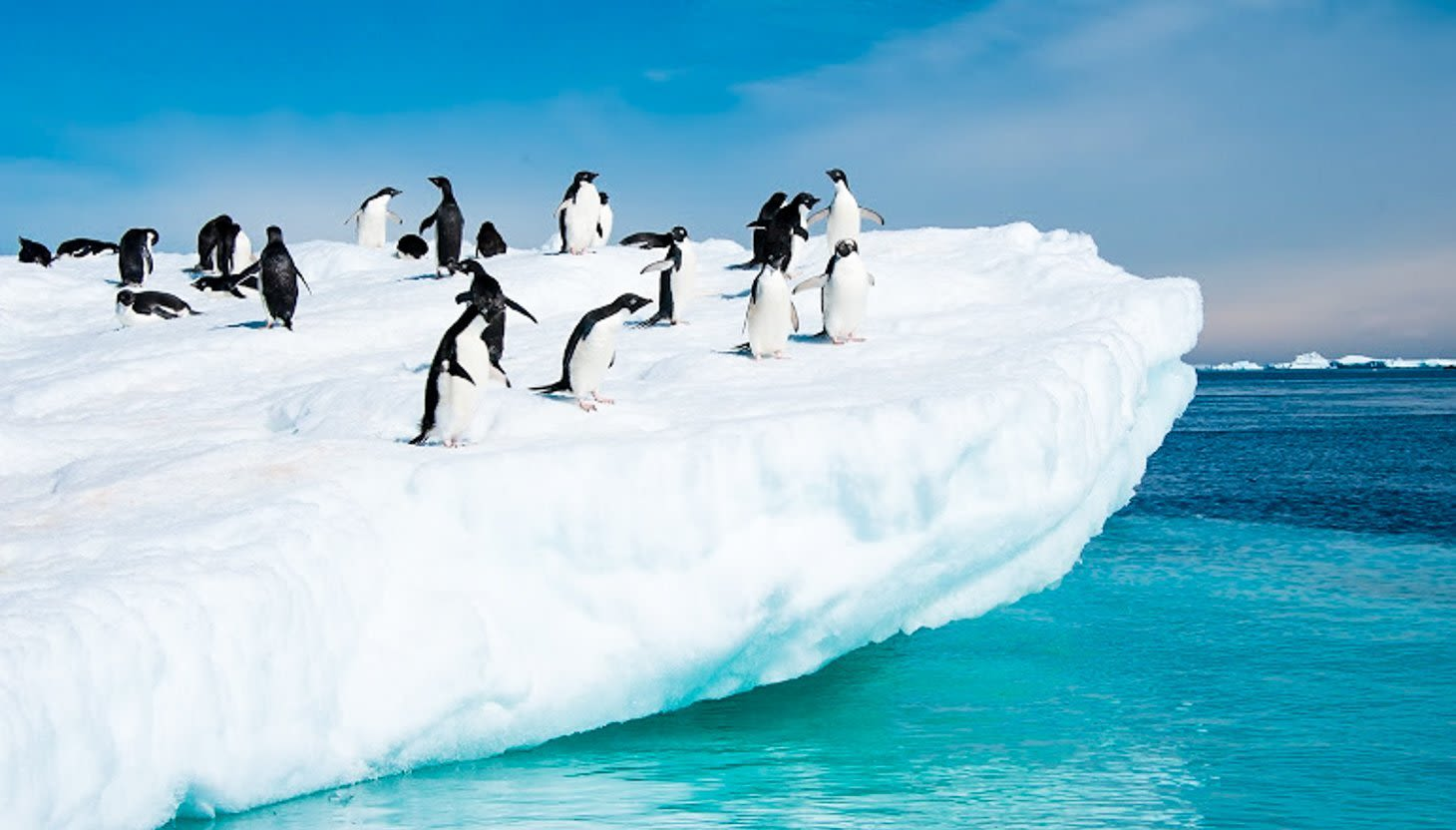 Group of penguins stands on iceberg