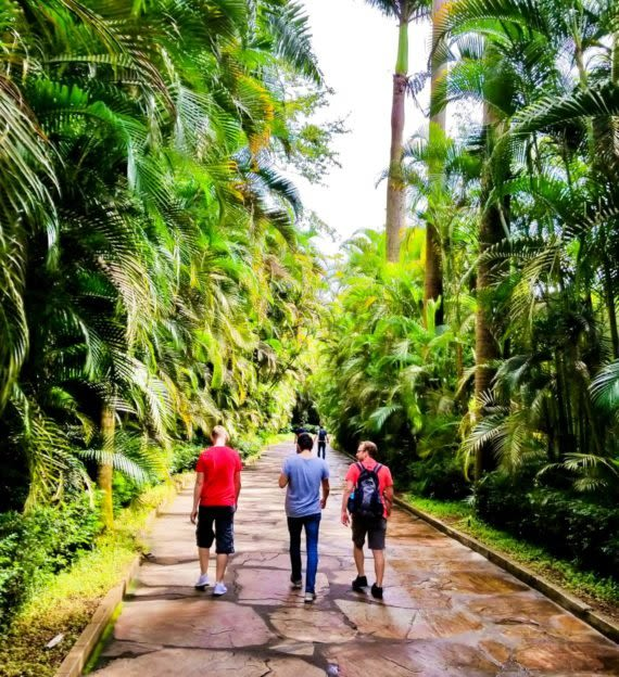 Three people walk down jungle path