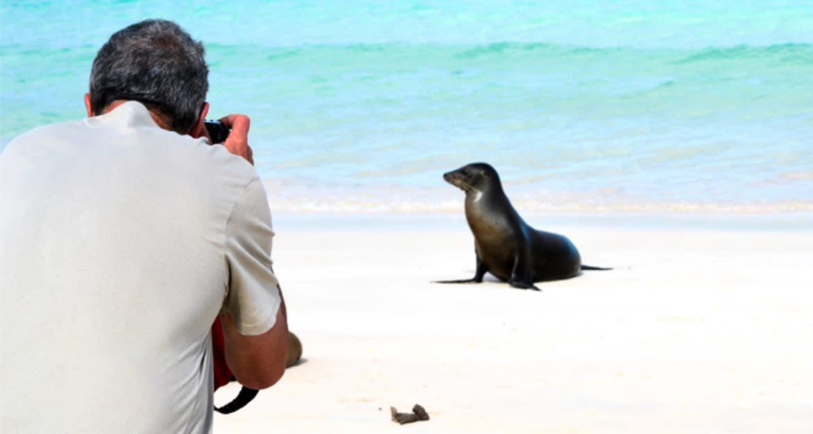 Photographer takes photo of seal on beach