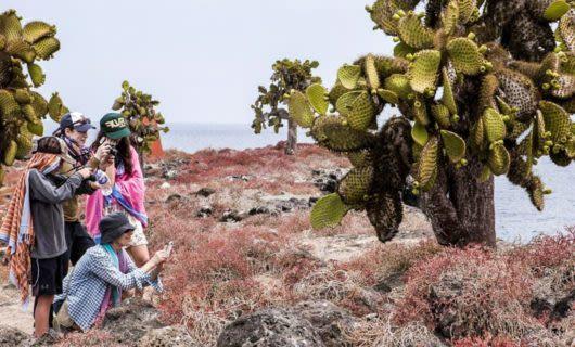 Group of tourists take photos of cactus