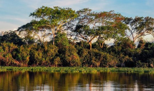 jungle-pond-in-brazil-with-dense-folliage-behind