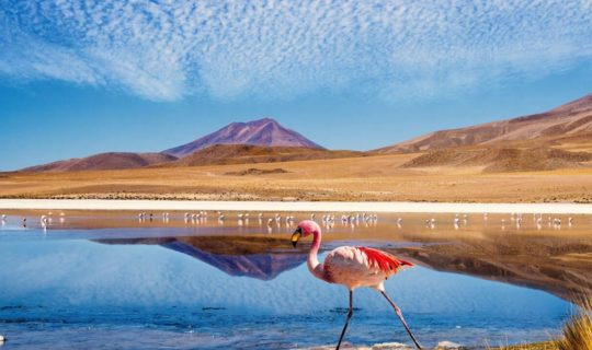 Bolivia salt flats and flamingo