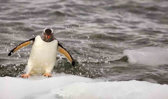 cute-penguin-sliding-on-iceberg