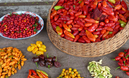 fresh-produce-from-market-with-peppers-and-tomato