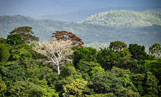 surama-mountain-nature-tree-tops
