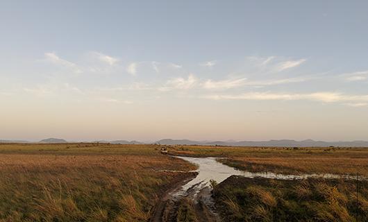 vast horizon on guyana savanna with flooded road