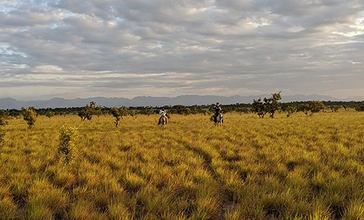 tourists riding horseback in dry scenic field