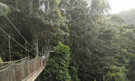 woman walking across canopy bridge high in the jungle