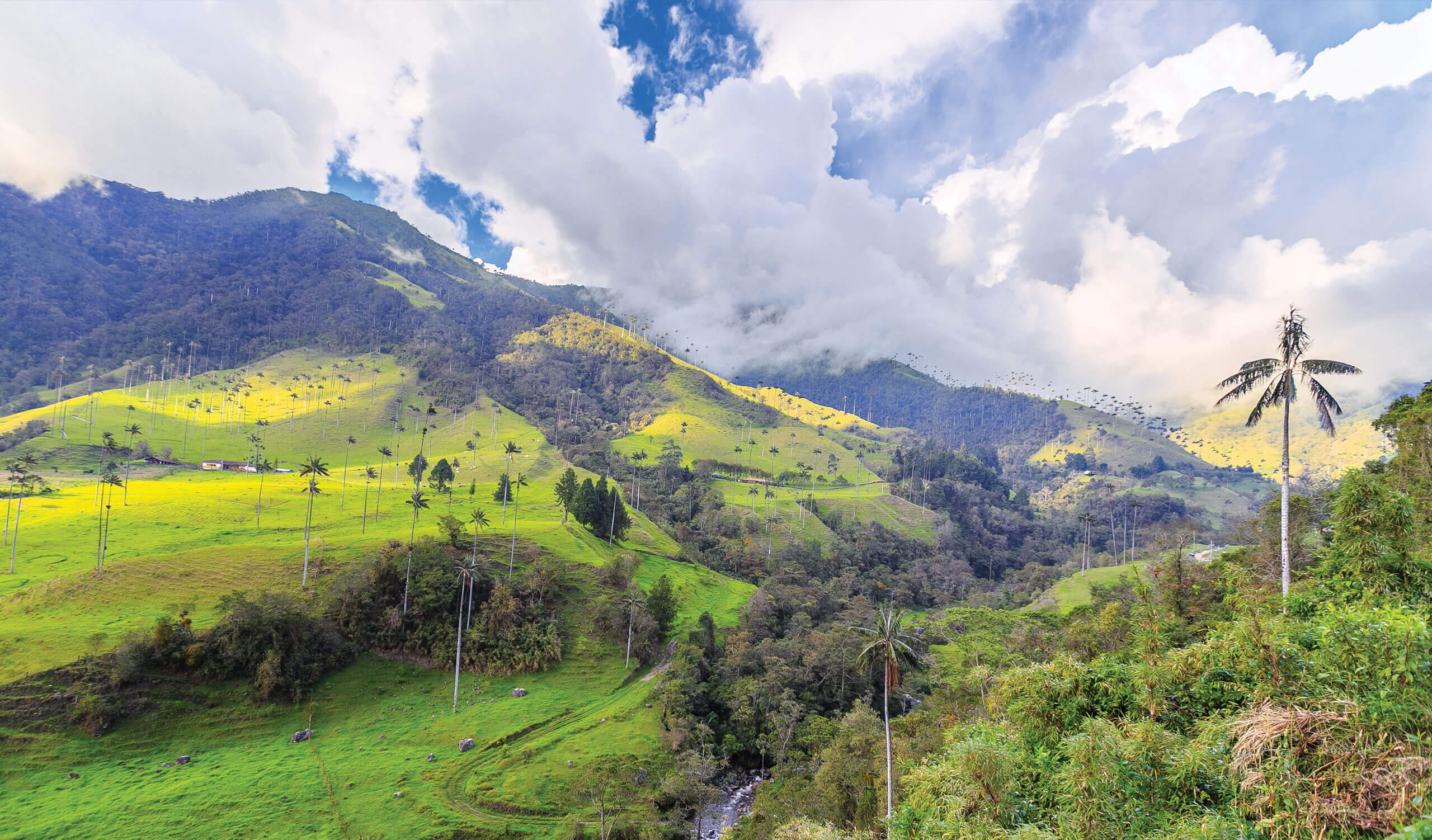 valley in the coffee region of colombia