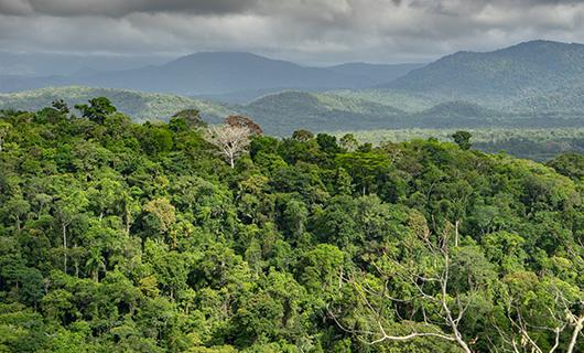 wide horizon shot over Guyana interior jungle and hills in background