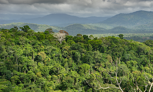 wide horizon shot over Guyana interior jungle and hills in background