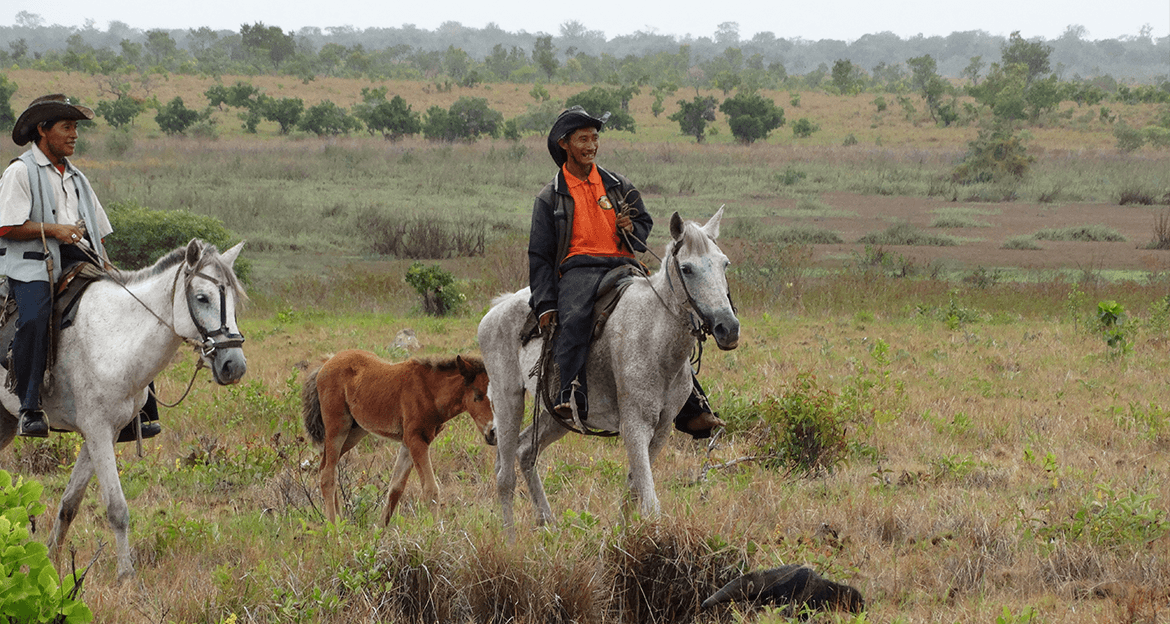 two local men ride horses alongside a baby horse