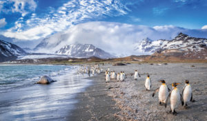 penguins walking the shores of an island in antarctica
