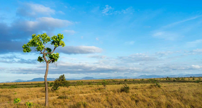 large beautiful savannah in guyana