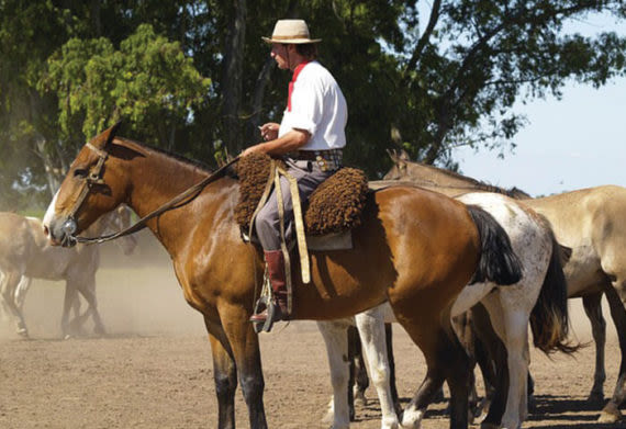 riding on horses with argentine gauchos is one of the best things to do in argentina