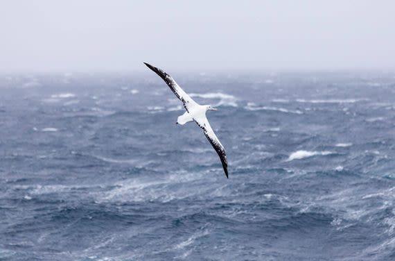 bird watching in antarctica