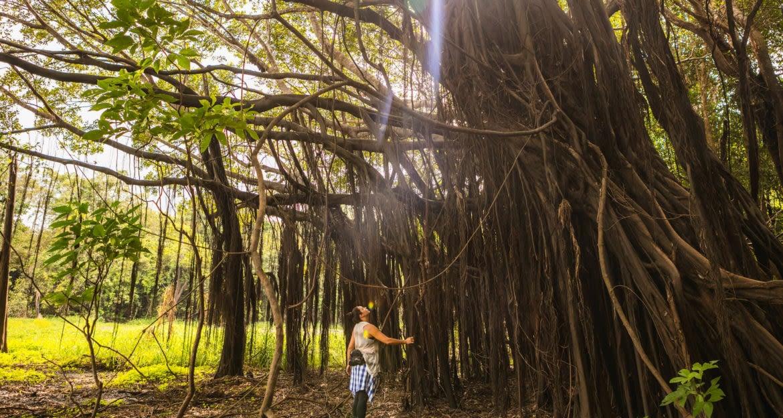 woman viewing massive tree in jungle