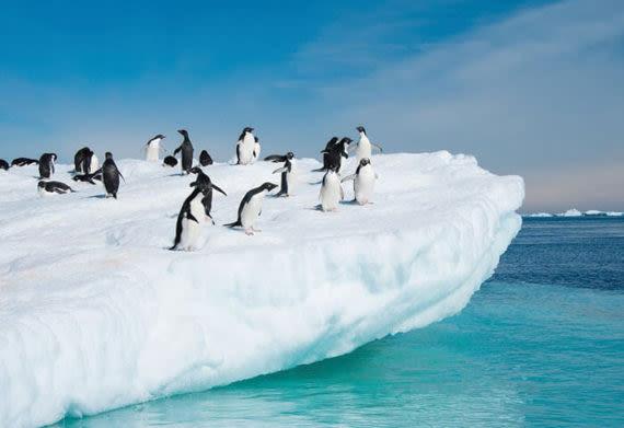 penguins in antarctica on a glacier