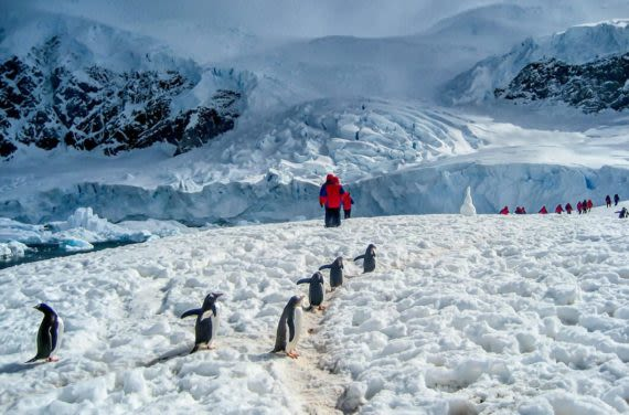 Tourists walking with penguins on island