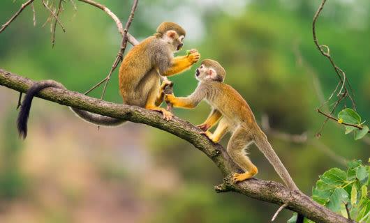 Cute monkeys sitting on jungle branch