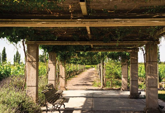 a bench for sitting in mendoza argentina vineyards