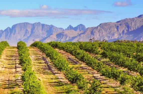 Chilean vineyard and mountains