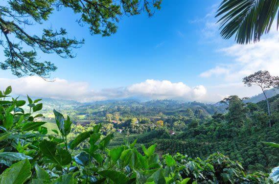 Colombia Coffee Region views