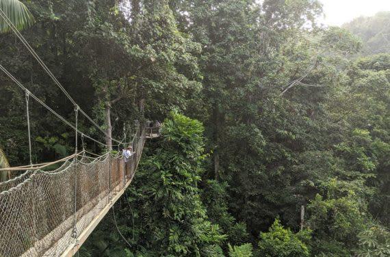 Iwokrama Canopy Walkway in jungle