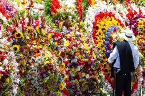 flowers in medellin