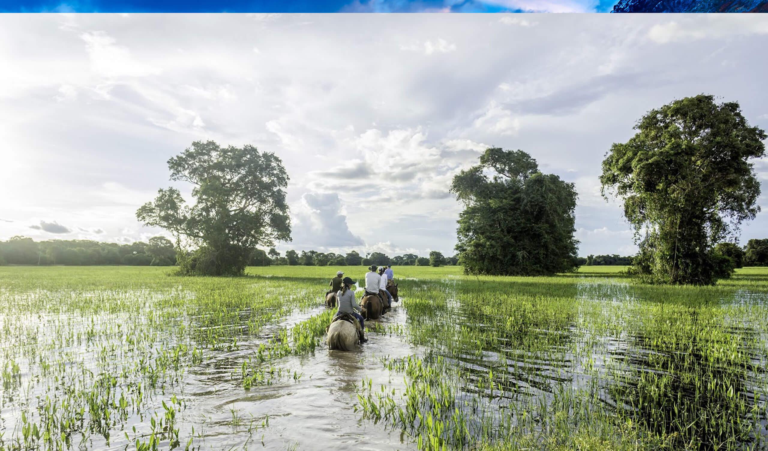 tourists riding horses through wetland