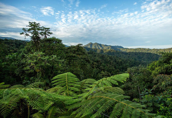 picture of the cloud forest in ecuador