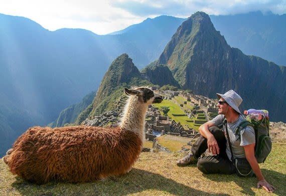 Friendly llama and a traveler