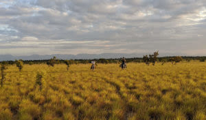 savannah horses and tourists