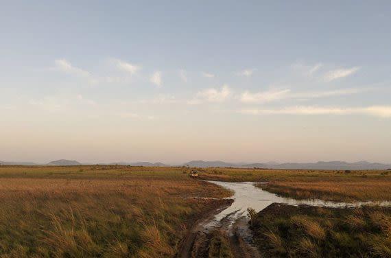 savannah horizon