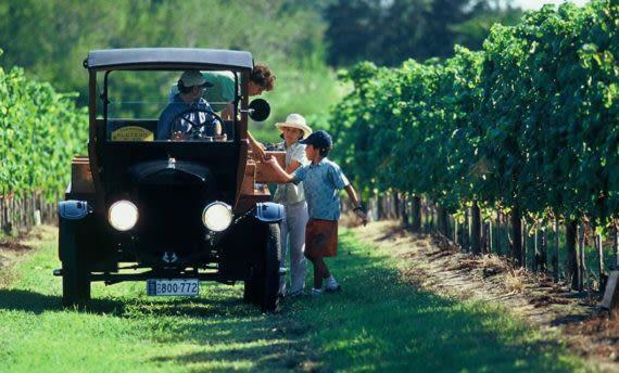 vineyard in Uruguay