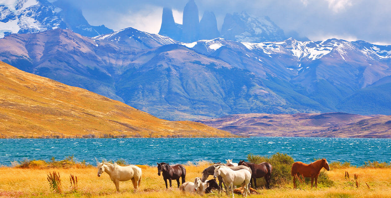 Horses grazing in front of torres del paine towers