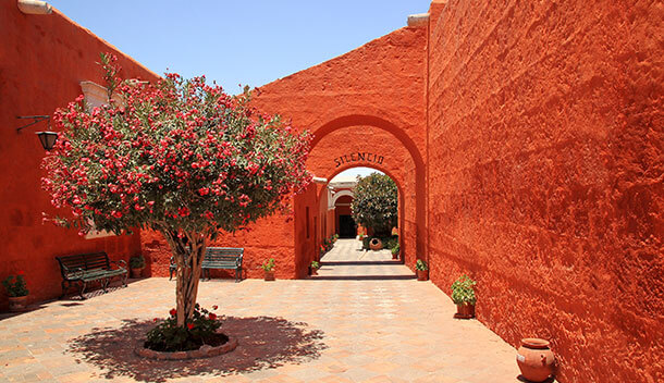 red walls and beautiful tree in the santa catalina monastery
